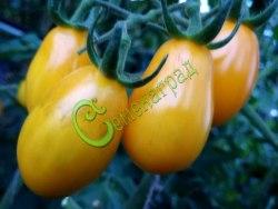 Семена томатов Слива желтая - 1 уп.-20 семян - высокорослый, обильный, 90 г, в солку. Семенаград - семена почтой