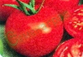 Семена томатов Брекодей (20 семян - низкорослый, до 150 г, ранний)