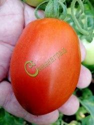 Семена томатов Слива китайская - 1 уп.-20 семян - высокорослый, красный, гроздевой, во множестве, 90 г, в солку. Семенаград - семена почтой