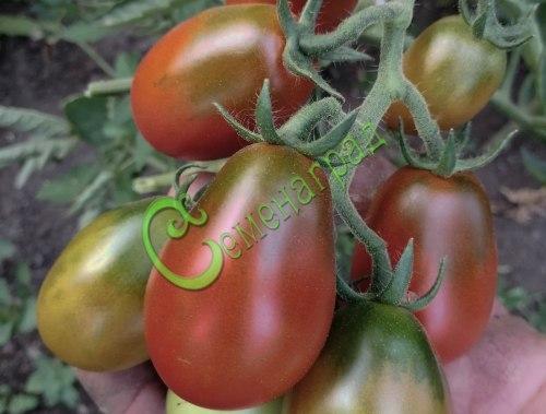 Семена томатов Слива черная - 1 уп.-20 семян - высокорослый, 90 г, обильный, в солку. Семенаград - семена почтой