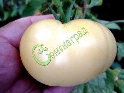 Семена томатов Снежный ком - 1 уп.-20 семян - высокорослый, до 300 г, белый, бескислотный, урожайный. Семенаград - семена почтой