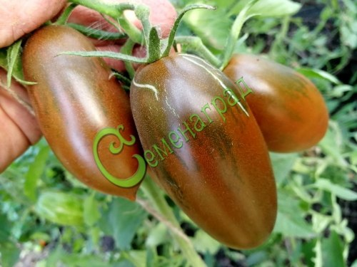 Семена томатов Сосулька чёрная-2 - 1 уп.-20 семян - высокорослый, коричнево-чёрные плоды, высокоурожайный, сладкий, до 130 г. Семенаград - семена почтой