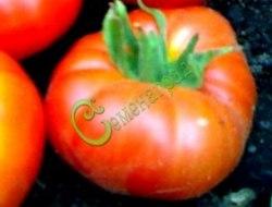 Семена томатов Супри - 1 уп.-20 семян - высокорослый, до 400 г, труды окупятся. Семенаград - семена почтой