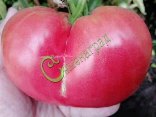 Семена томатов Трипл-кроп, 1 уп.-20 семян - высокорослый, до 500 г, розовый, урожайный. Семенаград - семена почтой