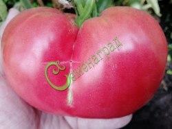 Семена томатов Трипл-кроп - 1 уп.-20 семян - высокорослый, до 500 г, розовый, урожайный. Семенаград - семена почтой