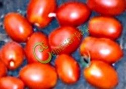 Семена томатов Тюльпан - 1 уп.-20 семян - высокорослый, до 150 г, в форме бутона, ранний, очень обильный, красотища. Семенаград - семена почтой