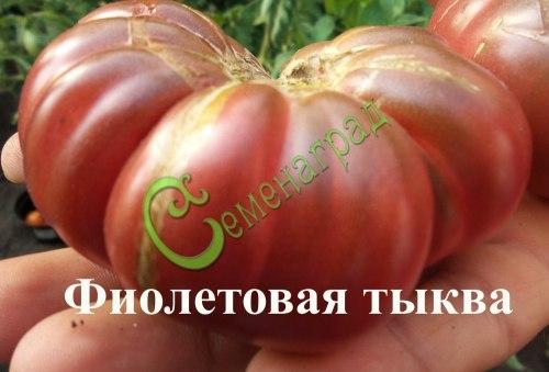 Семена томатов Фиолетовая тыква - 20 семян, высокорослый, до 180 г, мякоть плодов плотная, сладкая, очень ароматная