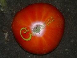 Семена томатов Французский гигант - 1 уп.-20 семян - высокорослый, до 500 г, красивое зрелище. Семенаград - семена почтой