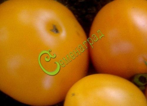 Семена почтой томат Хурма - 20 семян - высокорослый, до 250 г, оранжевый, малосемянный