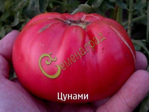 Семена томатов Цунами - 20 семян - высокорослый, слегка овальный, розовый, 300 г
