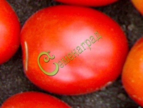 Семена томатов Чародей - 20 семян - высокорослый, до 200 г, малосемянный