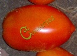 Семена томатов Чемпион Бурятии - 1 уп.-20 семян - среднерослый, до 150 г, по форме как перцевидный. Семенаград - семена почтой