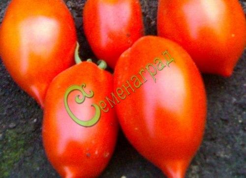 Семена томатов Черемош - 20 семян - высокорослый, до 200 г, овальный с кончиком, лежкий, в солку
