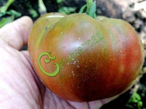 Семена томатов Чёрный ананас, 1 уп.-20 семян - высокорослый, круглоплоский, кроваво-чёрный, сладкий, до 300 г. Семенаград - семена почтой
