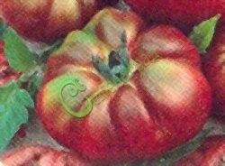 Семена томатов Чёрный Кримей - 1 уп.-20 семян, выведен во Франции - высокорослый, круглоплоский, сегментированный, крупный, до 400 г, сладкий, цвет от красного до тёмно-фиолетового. Семенаград - семена почтой