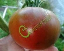 Семена томатов Чёрный мамонт - 1 уп.-20 семян - высокорослый, круглоплоский, до 300 г, чёрный, сладкий. Семенаград - семена почтой