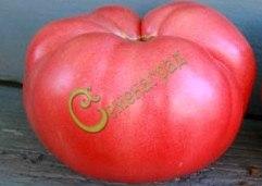 Семена почтой томат Чудо Земли - 20 семян - высокорослый, до 1 кг, розовый