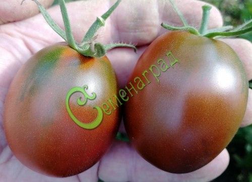Семена томатов Щедрая сливянка - 1 уп.-20 семян - высокорослый, красно-коричневый, до 80 г, сладкий, урожайный, плотный, в солку. Семенаград - семена почтой