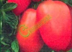 Семена томатов Югенд - 20 семян - высокорослый, до 200 г, овальный, розовый, сахаристый