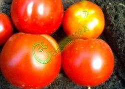 Семена томатов Юрмала - 1 уп.-20 семян - высокорослый, до 150 г, урожайный, многоплодный. Семенаград - семена почтой