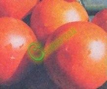 Семена томатов Яблонька России - 1 уп.-20 семян - среднерослый, до 120 г, урожайный, очень популярный, ранний. Семенаград - семена почтой