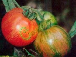 Семена томатов Яблочный окрас - среднерослый, до 150 г, с полосками и румянцем, эксклюзив, у этого сорта семена мелкие, сажать на глубину 0,5 см. Семенаград - семена почтой