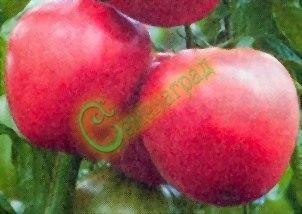 Семена томатов L- 402 (20 семян - высокорослый, до 600 г, розовый, овальный)