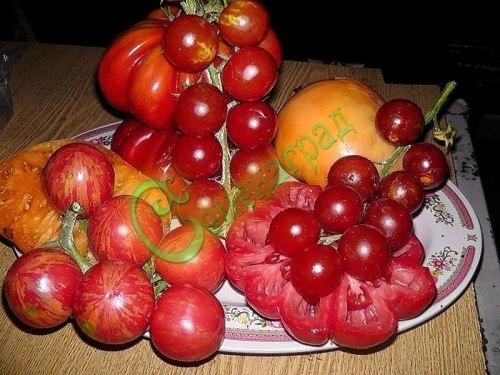 Семена томатов - 1 уп.-20 семян - смесь сортов. Семенаград - семена почтой