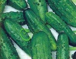 Семена огурцов Мовир-1 - очень урожайный, раннеспелый, салатно-засолочный, урожайность до 25 кг/кв.м. Семенаград - семена почтой