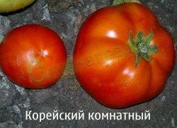 Семена томатов Корейский комнатный, 1 уп.-20 семян - высокорослый, до 150 г, урожайный. Семенаград - семена почтой