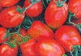 Семена томатов Космический (20 семян - высокорослый, среднеранний, овальный, 20-30 г)