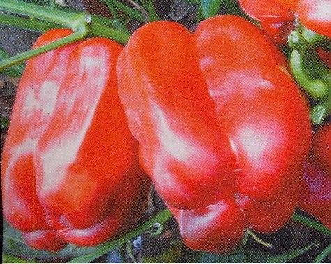 Семена сладкого перца Агаповский - 1 уп.-10 семян - цилиндрический, красный, крупный. Семенаград - семена почтой
