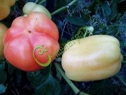 Семена сладкого перца Белоснежка - 1 уп.-10 семян - цилиндрический, белый, розовеющий, крупный. Семенаград - семена почтой