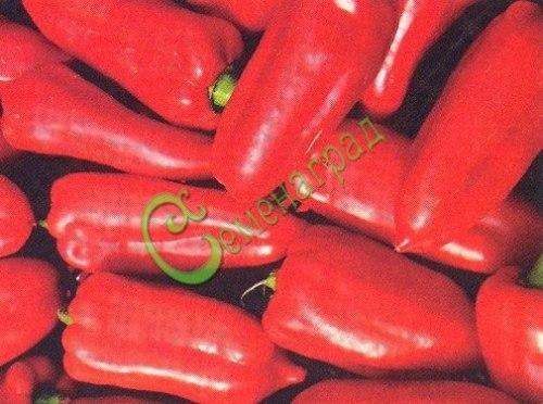 Семена сладкого перца Букет Болгарии - 10 семян - конический, красный, крупный, ранний