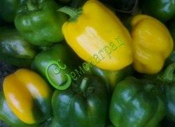 Семена сладкого перца Гладиатор, 1 уп.-10 семян - цилиндрический, желтый, крупный. Семенаград - семена почтой