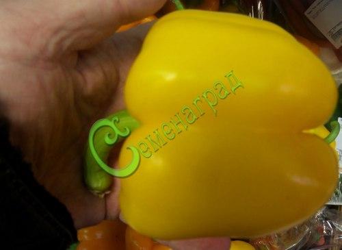 Семена сладкого перца Золотой юбилей - 1 уп.-10 семян - цилиндрический, желтый, крупный. Семенаград - семена почтой