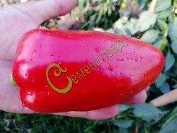 Семена сладкого перца Кубанский великан, 1 уп.-10 семян - конический, красный, крупный. Семенаград - семена почтой