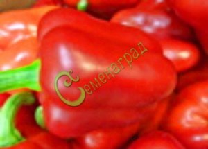 Семена сладкого перца Лилак Ловендр, выведен в США - крупный, цилиндрический, красный, ранний. Семенаград - семена почтой