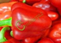 Семена сладкого перца Лилак Ловендр - 1 уп.-10 семян, выведен в США - крупный, цилиндрический, красный, ранний. Семенаград - семена почтой