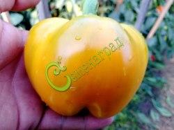 Семена сладкого перца Лютеус - 1 уп.-10 семян - круглый, желтый, крупный. Семенаград - семена почтой