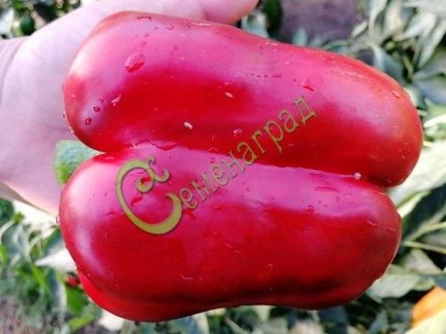 Семена почтой сладкий перец Нижегородское чудо - 10 семян - цилиндрический, красный, крупный