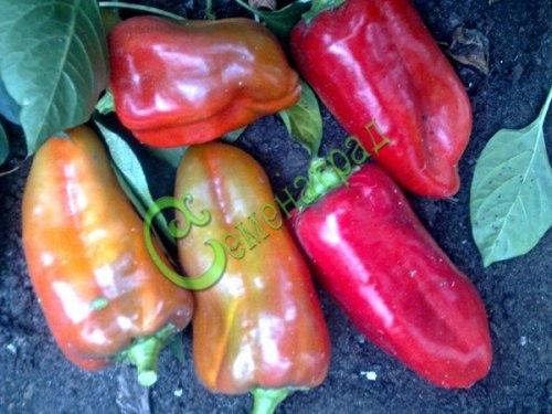 Семена сладкого перца Тихоновский - 10 семян - конический, красный, крупный
