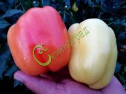 Семена сладкого перца Шорокшары - 1 уп.-10 семян - цилиндрический, белый, розовеющий, крупный. Семенаград - семена почтой