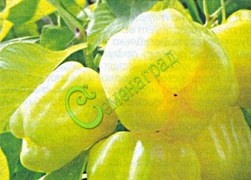 Семена острого перца Мотылёк - 10 семян - жёлтый, крупный, цилиндрический