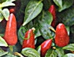 Семена острого перца Огонек - 1 уп.-10 семян - плоды мелкие, очень острые. Семенаград - семена почтой