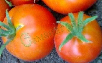 Семена томатов Оконный штамб (20 семян - высокорослый, ранний, до 120 г)