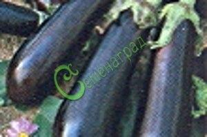 Семена баклажана Юбилейный - 10 семян - цилиндрический, фиолетовый, экзотичный