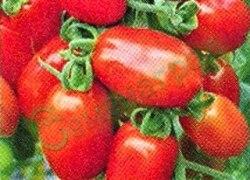 Семена томатов Петолич, 1 уп.-20 семян - низкорослый, среднеранний, до 150 г, овальный, лежкий. Семенаград - семена почтой