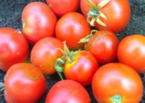 Семена томатов Пламя (20 семян - очень ранний, низкорослый, до 110 г)