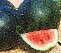 Семена арбуза Арбуз «Сахарный малыш» - ранний сорт, известный, для средней полосы. Семенаград - семена почтой
